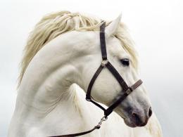 Best Horse Wallpapers 732