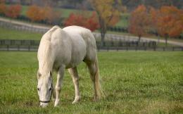 White horse wallpapers | White horse stock photos 726
