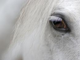 White Horse Wallpapers 721
