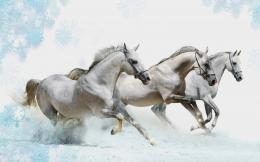 White Horse Wallpapers 1233