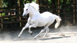 White Horse Wallpapers 335