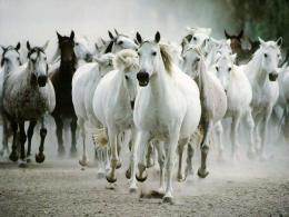 White Horse Wallpapers 1765