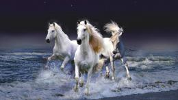 white horse wallpapers white horse wallpapers white horse wallpapers 1200