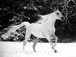 White Horse Wallpapers 830