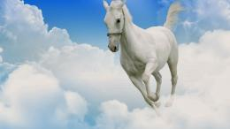 White Horse Wallpapers 1201