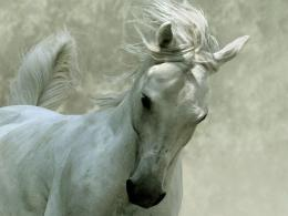 White Horse wallpaper 162