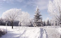 Winter Beautiful Wallpaper 1752