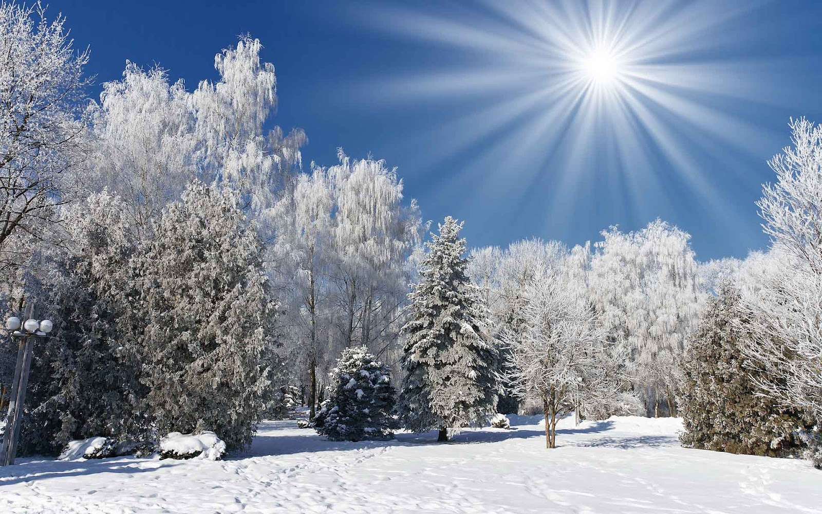 hd winter wallpaper met bomen en sneeuw hd winter foto jpg 365