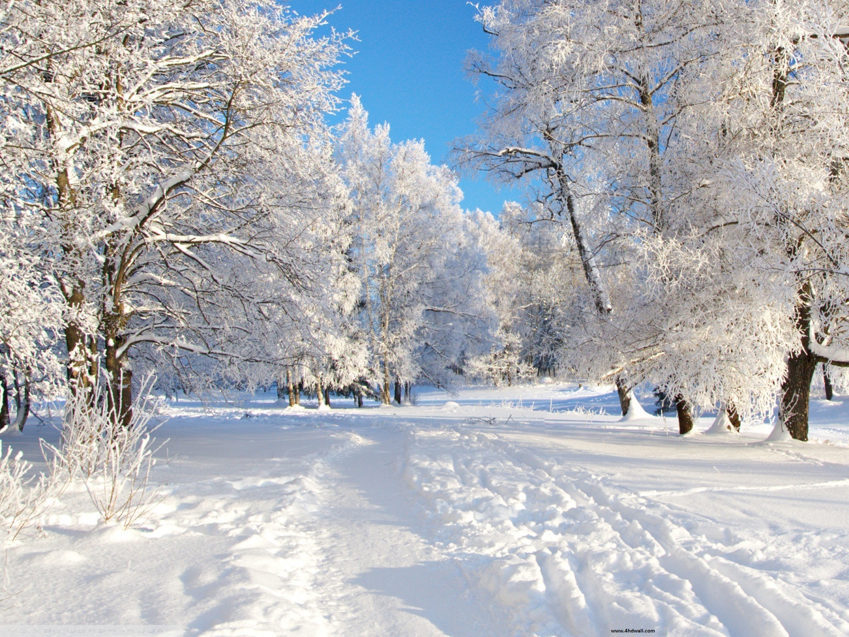 Download Free High Definition Winter Wallpapers 407