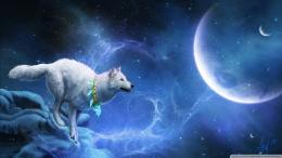 wallpaper image description for white wolf hd wallpaper white wolf hd 354