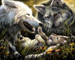 Wolf HD Wallpapers 1673