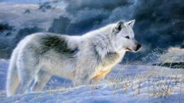 wolf gray wolf images gray wolf backround image gray wolf hd wallpaper 1915