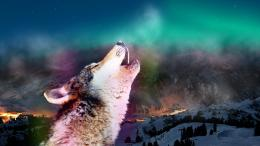 Howling Wolf HD Wallpapers 451