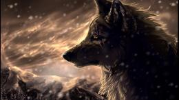 Wolf HD Wallpapers 956