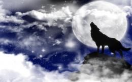Howling Wolf HD Wallpapers 191