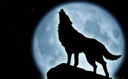 Howling Wolf HD Wallpapers 1613