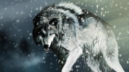 Wolf HD Wallpapers 231