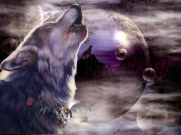Cool Wolf Backgrounds 11071 Hd Wallpapers 717