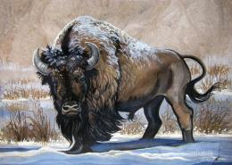 "American Bison Steadfast Warrior~ 11 5"" X 15 5\"" Watercolor Painting on 1846"