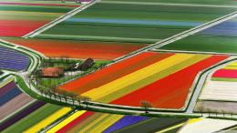 Aerial View Of Tulip Flower Fields Amsterdam The Netherlands wallpaper 791