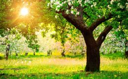 Fruit Trees Spring Wallpapers Pictures Photos Images 986
