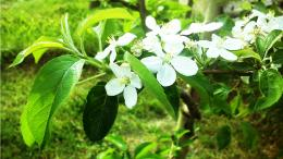 spring blossom on apple tree wallpapers 36761 2560x1440 jpg 713