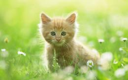Cute Baby Animal Wallpaper 1920×1200 pixel 803