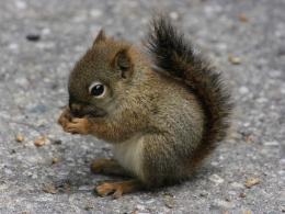 pixel Desktop Wallpapers : Baby Squirrel Cute Animal Wallpaper 766