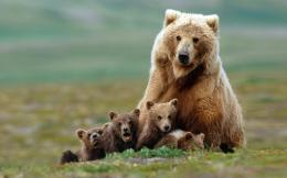 Baby Animals Desktop Backgrounds 960