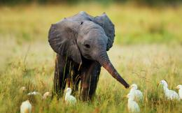 Nature Animals Cute Little Baby Elephant Wallpaper 1158
