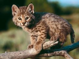 Baby Animal Wallpapers | Baby Animal Pictures | Cool Wallpapers 550