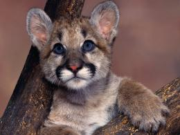 Baby Animal Wallpapers | Baby Animal Pictures | Cool Wallpapers 416
