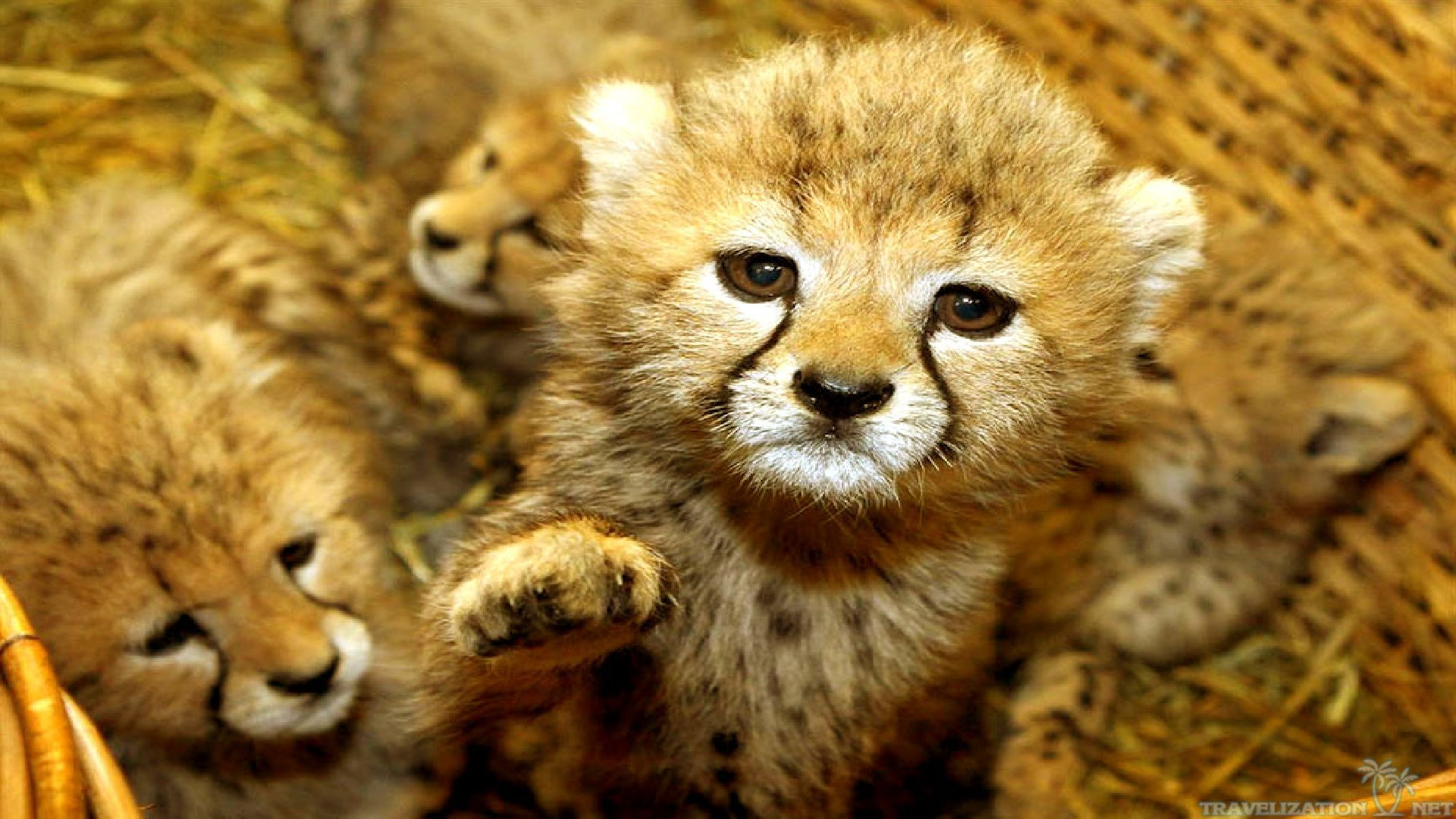cute baby animals wallpaper | free | download
