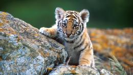 baby animal wallpaper 1 baby animal wallpaper 2 baby animal wallpaper 848