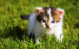 Animal Baby Cat In Grass Backgrounds Wallpapers 993