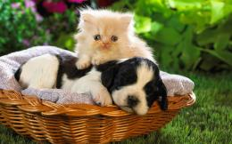 baby animal pictures cute puppy desktop wallpaper download baby animal 884