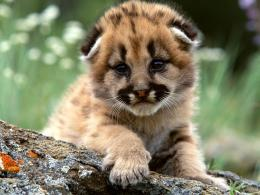 Funny wallpapers|HD wallpapers: cute baby tigers 1358