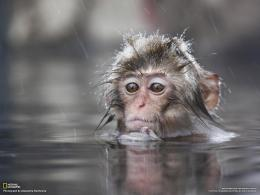 Nature wallpaper: Baby Monkey Wallpapers, Monkey Baby Funny Wallpapers 325