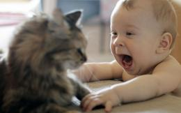 Description: Funny Baby And Cat HD Wallpaper is a hi res Wallpaper for 198