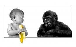 funny downloads 2514 tags funny monkey funny baby wide views 4784 950