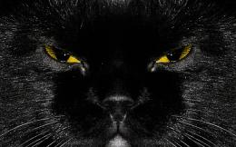 Black Cat HD Wallpapers Black Cat High Definition Wallpaper | DOWNLOAD 1274
