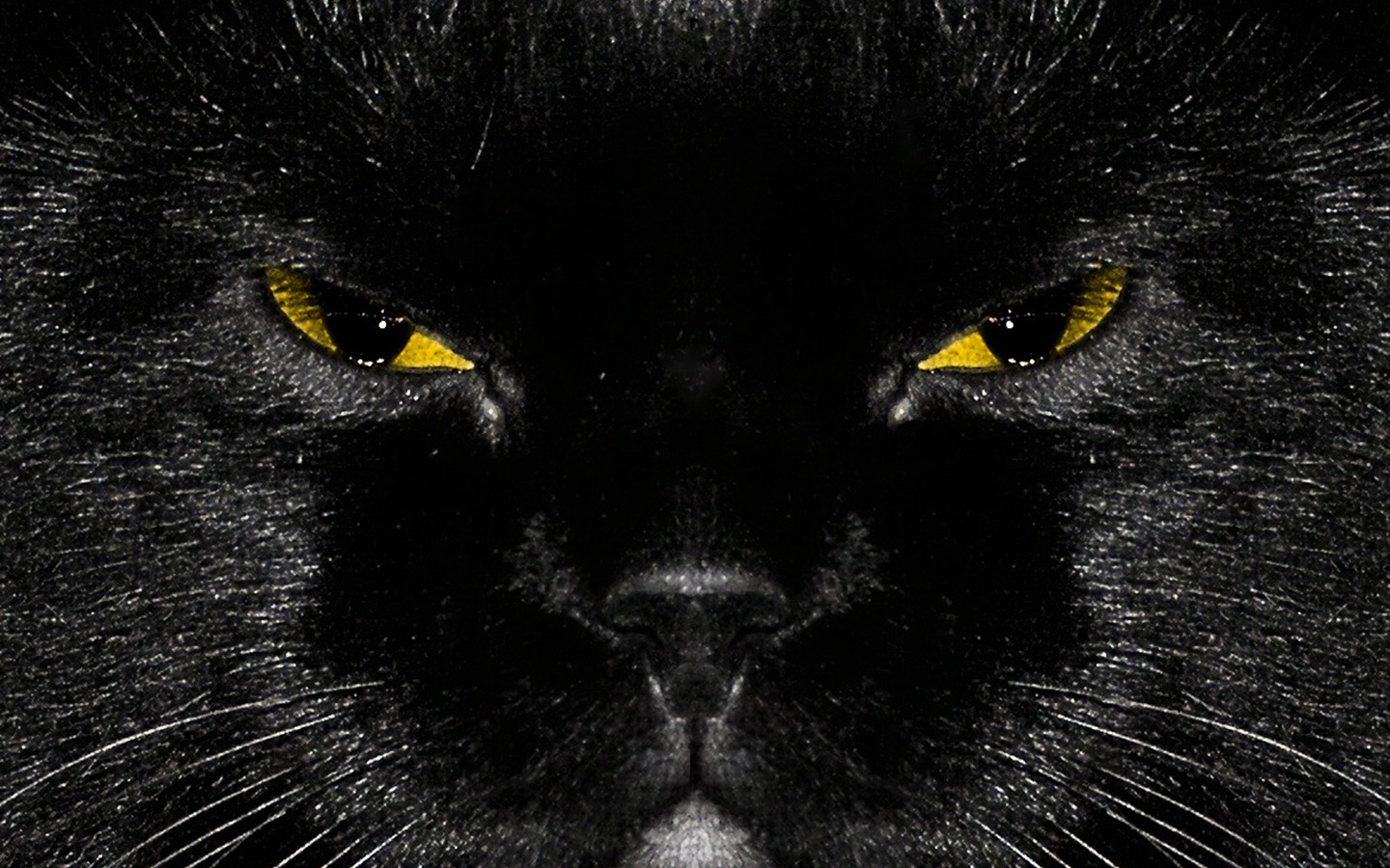 Black Cat HD Wallpapers Black Cat High Definition Wallpaper  DOWNLOAD