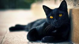 Black Cat Wallpaper HD | ImageBank biz 1103