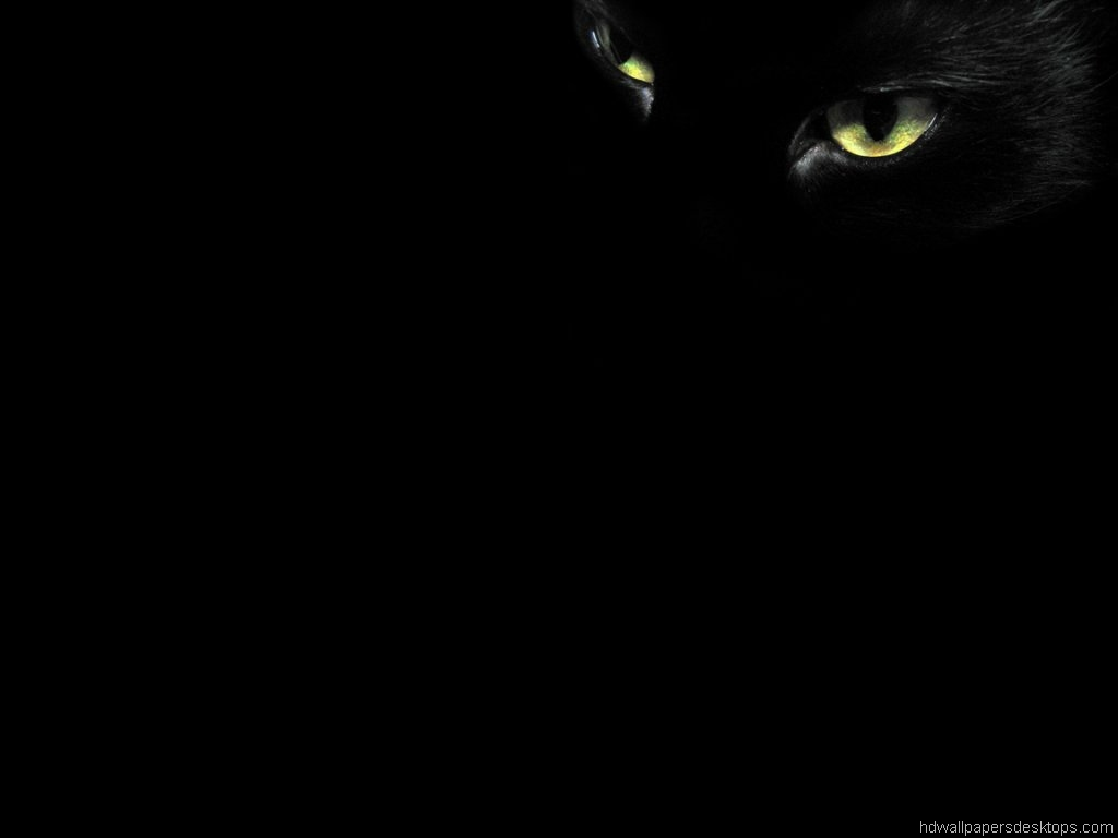 10 Animals Wallpaper, Desktop, Background, black cat eyes 1024x768 325 ...: digitalresult.com/view/10-black-cat-hd-wallpapers
