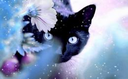 Beautiful CatCats Wallpaper16095933Fanpop 1762