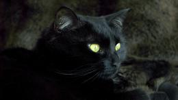 black cat eyes black cat best image black cat photo 563