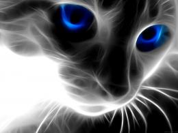 Black cat with blue eyes hd wallpaper 1080 1080 hd wallpapers jpg 633