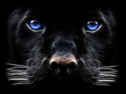 Backgrounds Windows Black Panther Big Cats Wallpaper | Full HD 1089