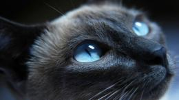 Black Grumpy Cat Images 1080p HD Wallpapers 236