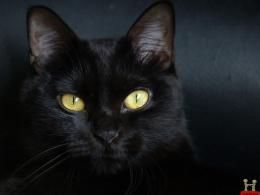 Beautiful Pure Black Cat HD Wallpaper 1061